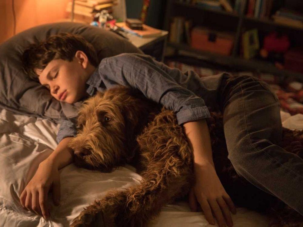 Jak rozmawiać z psem (2020) online - opis filmu. Gdzie oglądać?