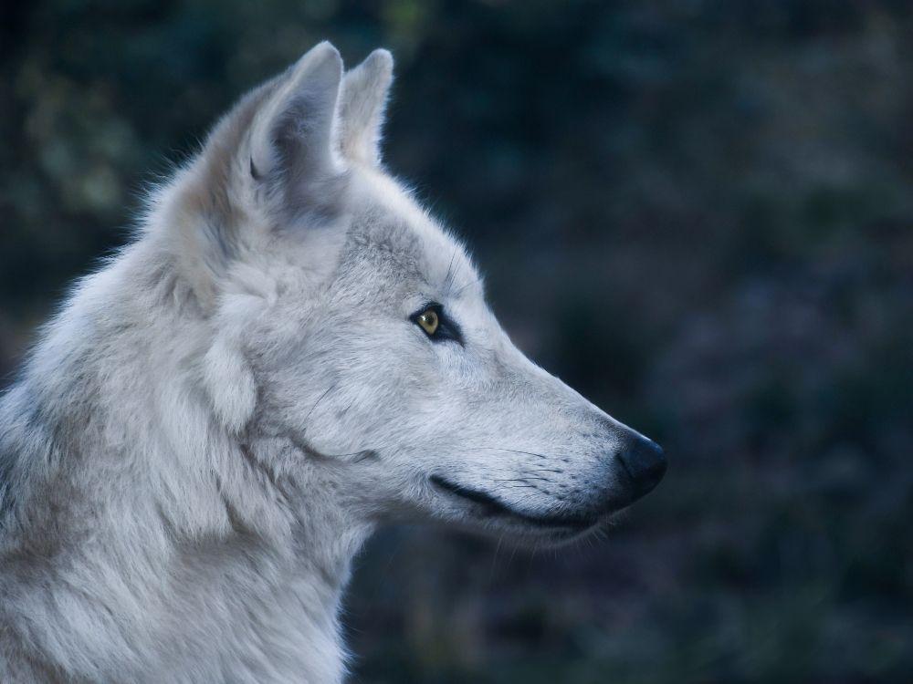 Jak zachować się podczas bliskiego spotkania z dzikim zwierzęciem?