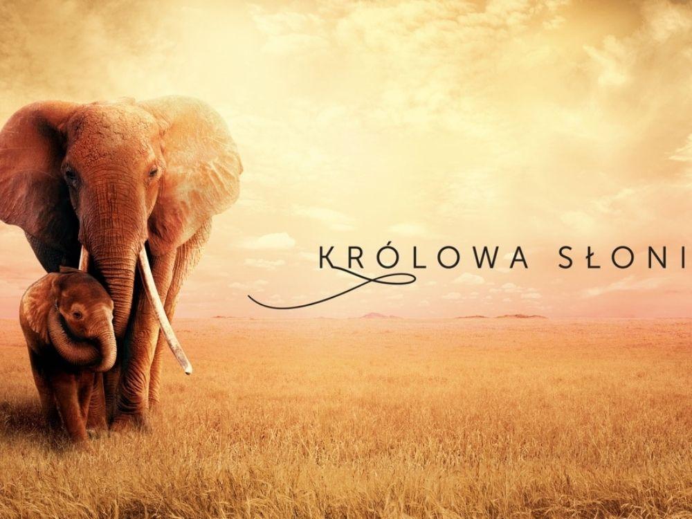 Królowa słoni - dołącz do podróży słoni