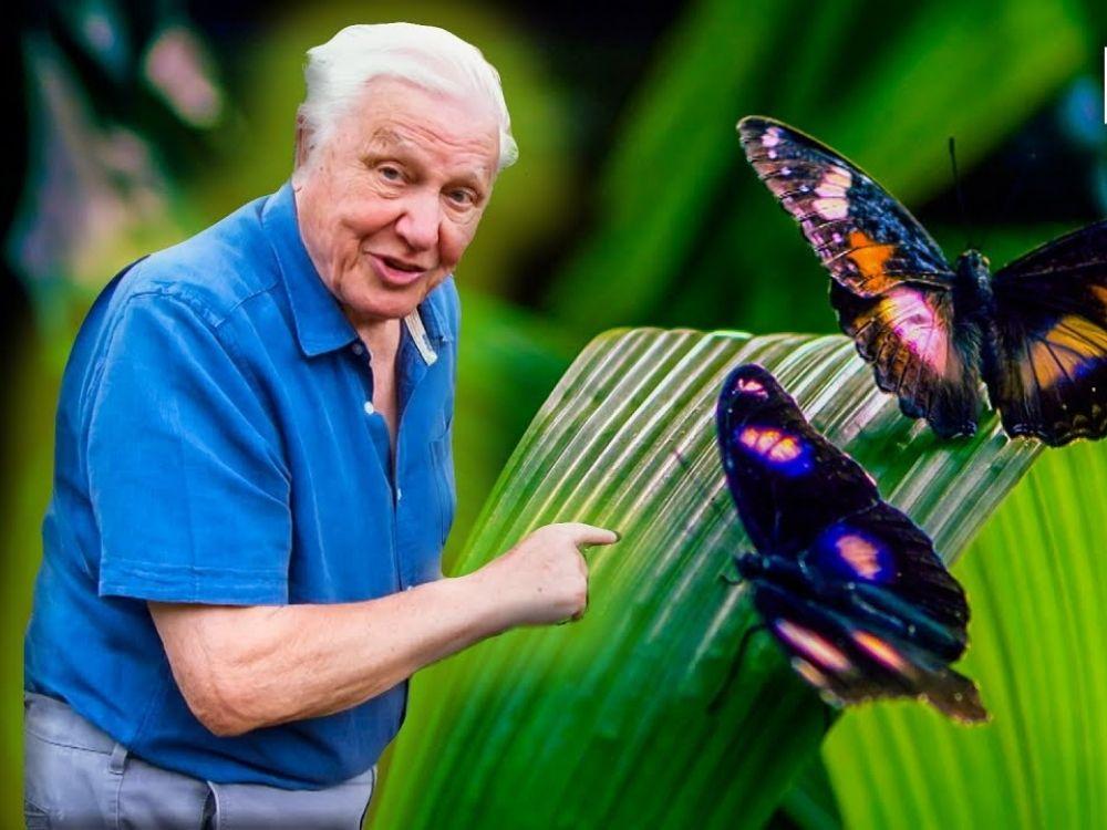 David Attenborough: Życie w kolorze - barwy świata zwierząt