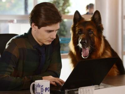 Komisarz Alex – dzielny pies na tropie przestępców