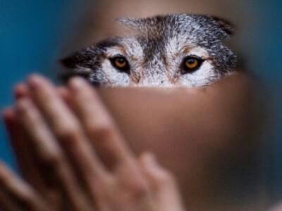 Dzika - kobieta i jej relacja z wilkiem