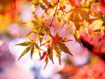 Złota jesień wraca – ponad 20 stopni!