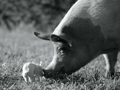 Gunda - życie oczami zwierząt