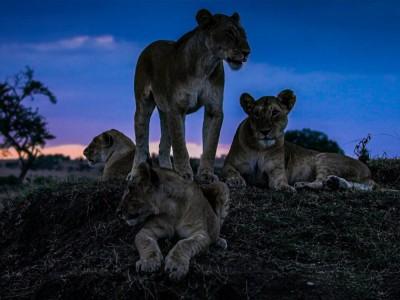 Ziemia nocą - co robią zwierzęta, kiedy zapada zmrok?