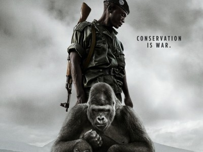Virunga - uratować górskie goryle