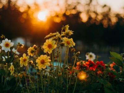 Imieniny Elżbiety – życzenia i wierszyki imieninowe