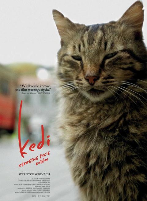 Kedi - sekretne życie kotów (2016) online. Obsada, opinie, opis fabuły, zwiastun